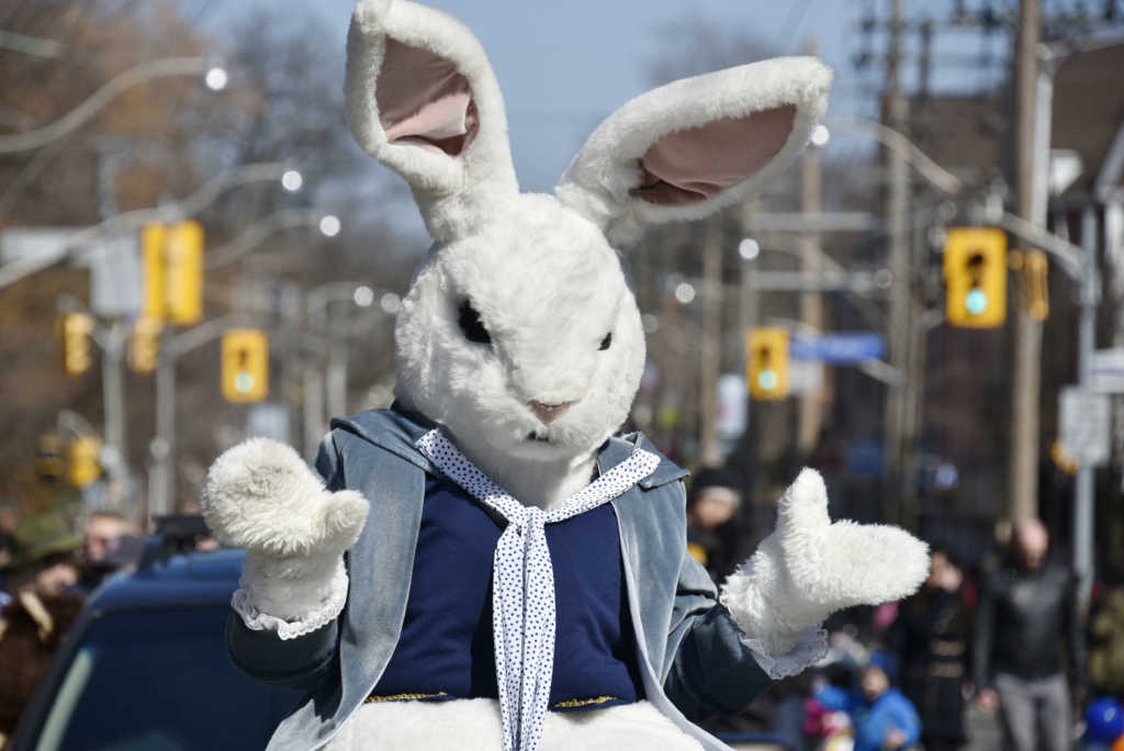 TORONTO, ONTARIO, CANADA - 2016/03/27: Easter Bunny during the Toronto Beaches Lion's Club Easter Parade a tradition that arrives to 50 year anniversary this year. (Photo by Roberto Machado Noa/LightRocket via Getty Images)